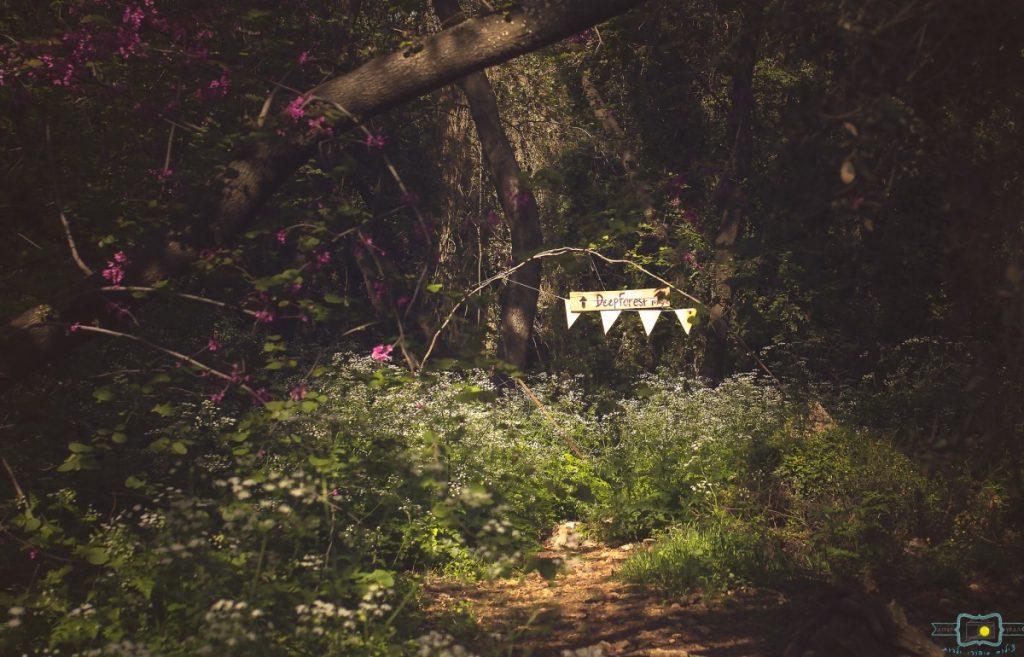 הבלון הצהוב- סטודיו לצילום ועיצוב גרפי IMG_0062-Edit-1024x657 יער הפיות  או ביקור בפסטיבל הפיות הראשון בישראל