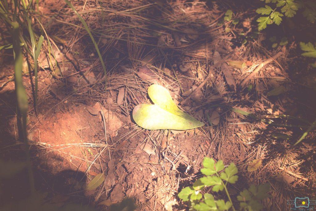 הבלון הצהוב- סטודיו לצילום ועיצוב גרפי IMG_0367-Edit-1024x683 יער הפיות  או ביקור בפסטיבל הפיות הראשון בישראל