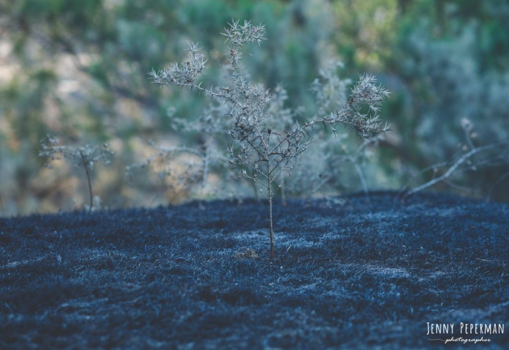 """ג'ני פפרמן צלמת הריון, נשיות, בוק בת מצווה ותדמית IMG_0029-1024x706 פרויקט צילום אישי """"צ'אקרת השורש""""-תמר, יסוד האדמה.  #דרוםשחור"""