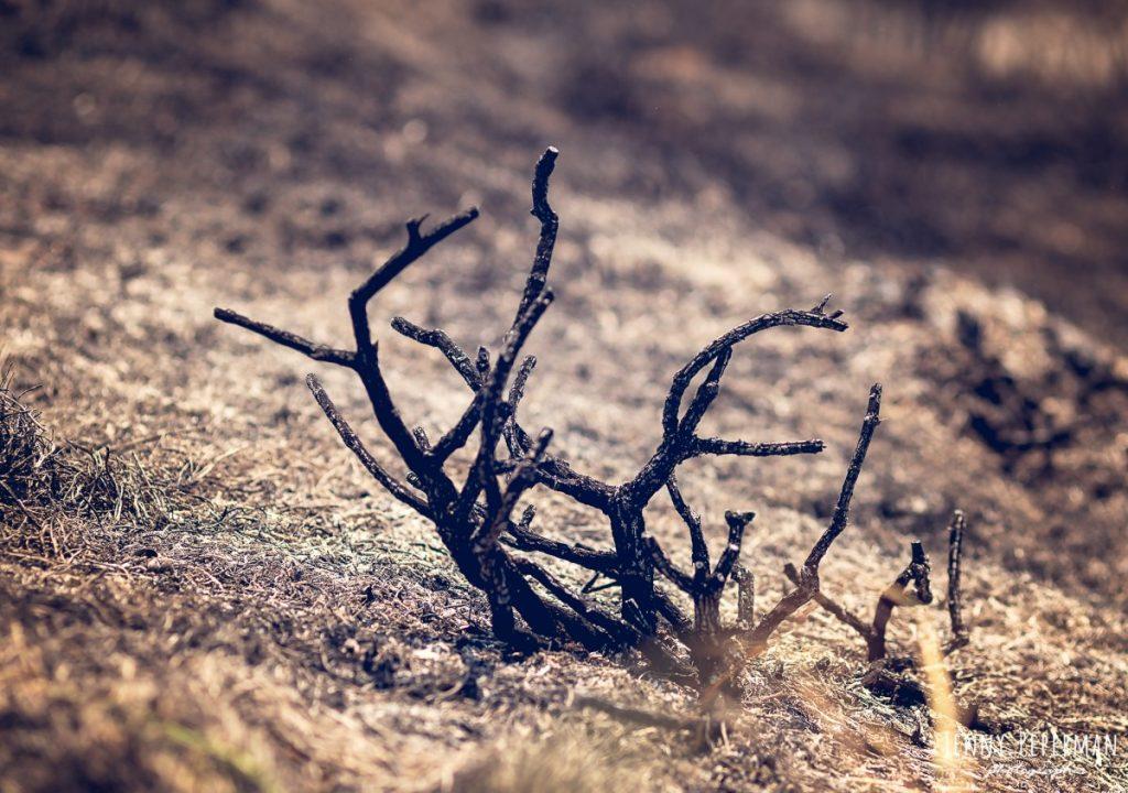 """הבלון הצהוב- סטודיו לצילום ועיצוב גרפי IMG_0097-Edit-1024x720 דרום שחור- פרוייקט צילום """"צו 8 לצלמים- למען הדרום הבוער"""