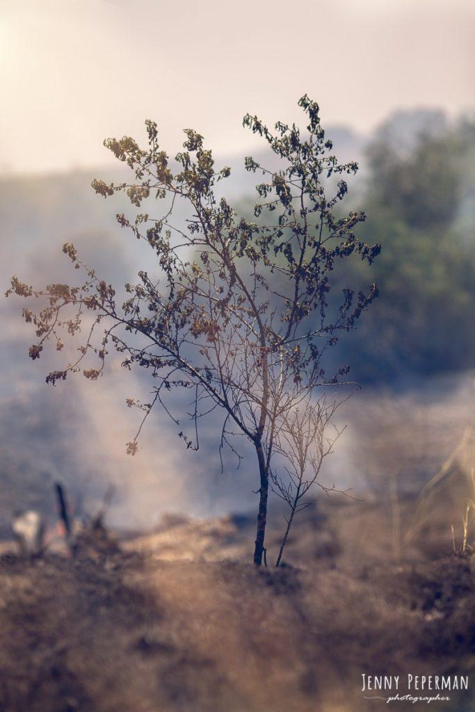 """הבלון הצהוב- סטודיו לצילום ועיצוב גרפי IMG_0102-Edit-683x1024 דרום שחור- פרוייקט צילום """"צו 8 לצלמים- למען הדרום הבוער"""
